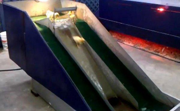canetons font du tobogan en cas de grève